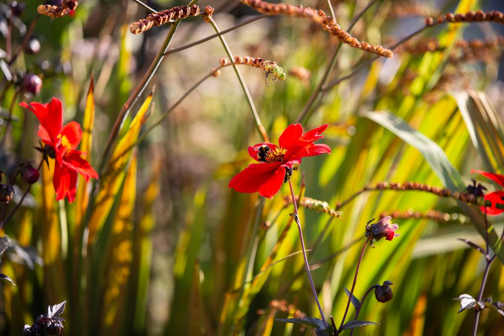 red flower in long grass